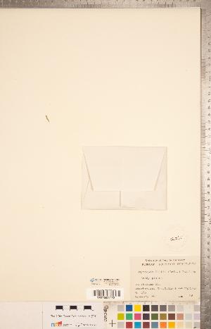 (Oxytropis bellii - CCDB-20331-G09)  @11 [ ] Copyright (2015) Deb Metsger Royal Ontario Museum