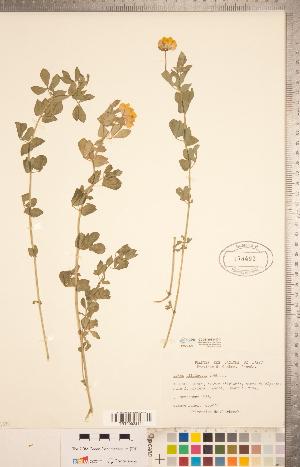 (Lotus - CCDB-20331-D11)  @11 [ ] Copyright (2015) Deb Metsger Royal Ontario Museum