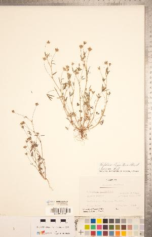 (Trifolium - CCDB-20332-C06)  @11 [ ] Copyright (2015) Deb Metsger Royal Ontario Museum