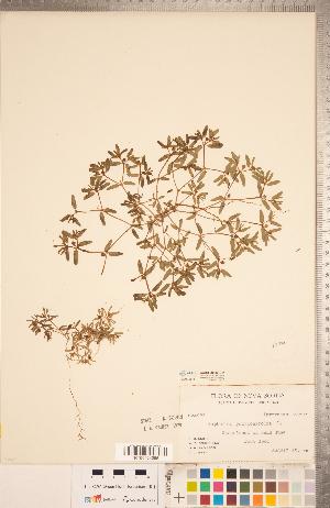 (Euphorbia polygonifolia - CCDB-20332-D11)  @11 [ ] Copyright (2015) Deb Metsger Royal Ontario Museum