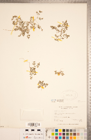 (Euphorbia geyeri - CCDB-20332-C11)  @11 [ ] Copyright (2015) Deb Metsger Royal Ontario Museum