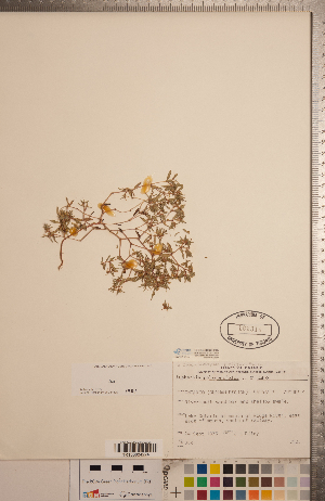 (Euphorbia polygonifolia - CCDB-20333-H02)  @11 [ ] Copyright (2015) Deb Metsger Royal Ontario Museum