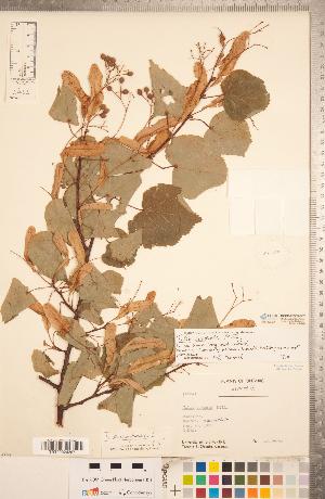( - CCDB-20333-B07)  @11 [ ] Copyright (2015) Deb Metsger Royal Ontario Museum