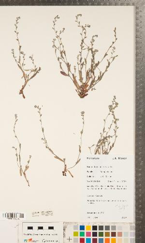 ( - CCDB-23324-C11)  @11 [ ] Copyright (2015) Deb Metsger Royal Ontario Museum