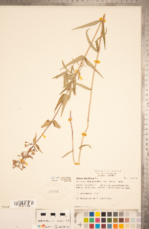 (Phlox maculata - CCDB-20335-E01)  @11 [ ] Copyright (2015) Deb Metsger Royal Ontario Museum
