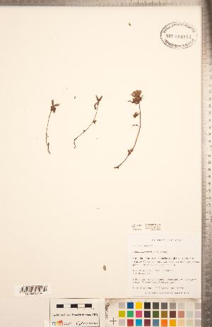 (Nepetoideae - CCDB-20336-H09)  @11 [ ] Copyright (2015) Deb Metsger Royal Ontario Museum
