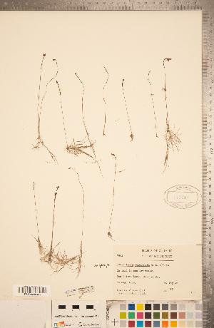 (Lentibulariaceae - CCDB-20339-A02)  @11 [ ] Copyright (2015) Deb Metsger Royal Ontario Museum