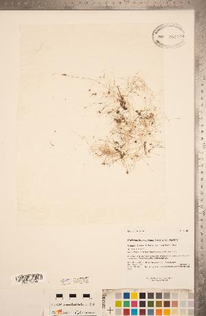 (Utricularia resupinata - CCDB-20339-H03)  @11 [ ] Copyright (2015) Deb Metsger Royal Ontario Museum