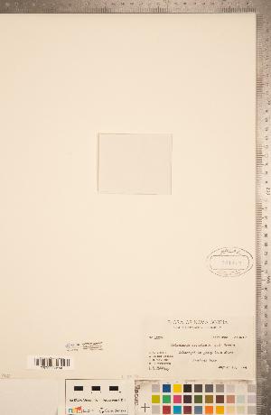 (Utricularia resupinata - CCDB-20339-F03)  @11 [ ] Copyright (2015) Deb Metsger Royal Ontario Museum