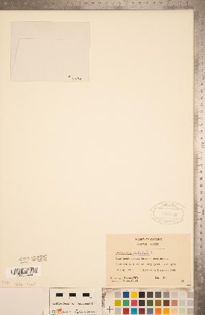 (Utricularia subulata - CCDB-20339-G05)  @11 [ ] Copyright (2015) Deb Metsger Royal Ontario Museum