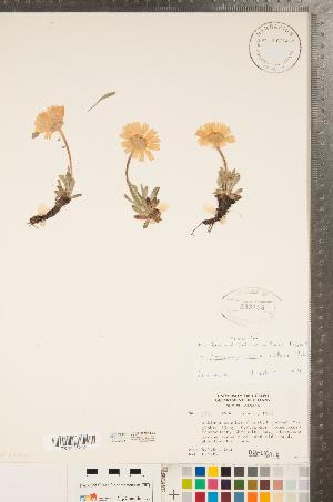 (Tetraneuris - CCDB-22993-E05)  @11 [ ] Copyright (2015) Deb Metsger Royal Ontario Museum
