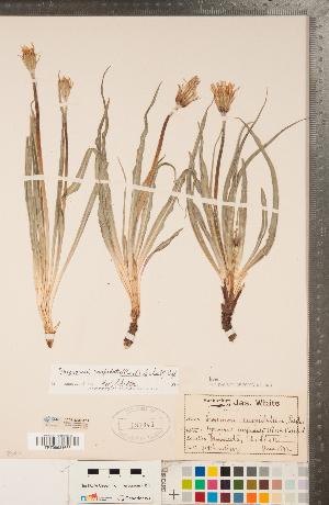 (Nothocalais - CCDB-22992-E03)  @11 [ ] Copyright (2015) Deb Metsger Royal Ontario Museum
