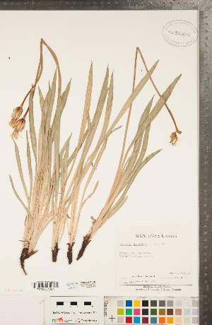 (Nothocalais - CCDB-22992-C03)  @11 [ ] Copyright (2015) Deb Metsger Royal Ontario Museum