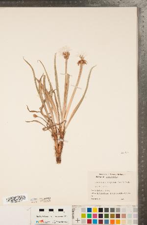 (Nothocalais - CCDB-22992-B03)  @11 [ ] Copyright (2015) Deb Metsger Royal Ontario Museum