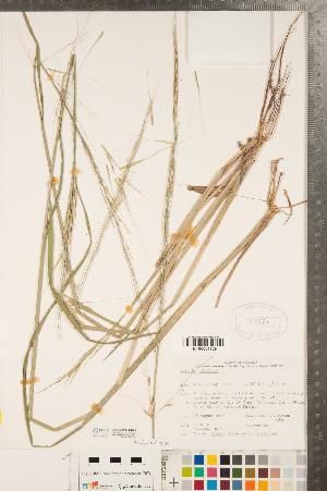 ( - CCDB-23112-H01)  @11 [ ] Copyright (2015) Deb Metsger Royal Ontario Museum