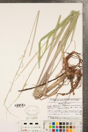 ( - CCDB-23112-G01)  @11 [ ] Copyright (2015) Deb Metsger Royal Ontario Museum