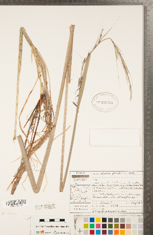 ( - CCDB-23112-F01)  @11 [ ] Copyright (2015) Deb Metsger Royal Ontario Museum