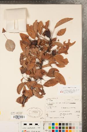 ( - CCDB-23110-E09)  @11 [ ] Copyright (2015) Deb Metsger Royal Ontario Museum
