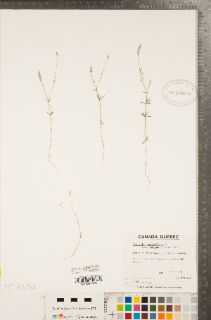 (Polygala ambigua - CCDB-23111-A04)  @11 [ ] Copyright (2015) Deb Metsger Royal Ontario Museum