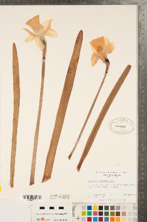 ( - CCDB-23112-F12)  @11 [ ] Copyright (2015) Deb Metsger Royal Ontario Museum