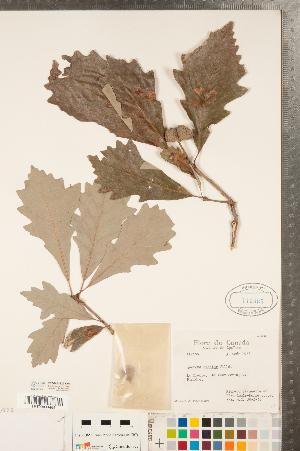 ( - CCDB-23122-C04)  @11 [ ] Copyright (2015) Deb Metsger Royal Ontario Museum