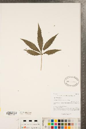 ( - CCDB-23122-D09)  @11 [ ] Copyright (2015) Deb Metsger Royal Ontario Museum