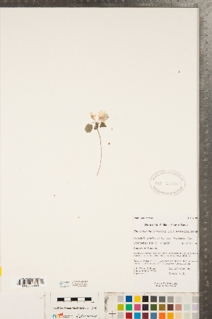 (Thalictrum - CCDB-23122-H12)  @11 [ ] Copyright (2015) Deb Metsger Royal Ontario Museum