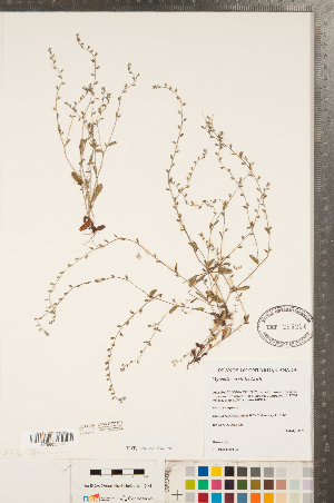 ( - CCDB-23324-D11)  @11 [ ] Copyright (2015) Deb Metsger Royal Ontario Museum