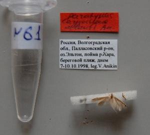 (Coleophora atlanti - ANIKIN-2011-0061)  @11 [ ] CreativeCommons - Attribution Non-Commercial (2011) Saratov State University Saratov State University