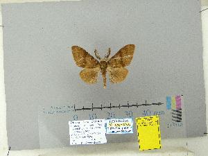(Lymantria monoides - CFIA-LEP0345)  @11 [ ] CreativeCommons – Attribution Share-Alike (by-sa) (2010) Canadian Food Inspection Agency Canadian Food Inspection Agency