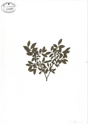 ( - NC2012_115)  @11 [ ] CreativeCommons - Attribution Non-Commercial (2012) MTMG McGill University Herbarium