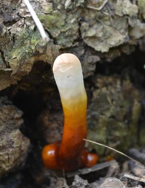 (Ganoderma lucidum - PHM10)  @11 [ ] C (2015) G D Khedkar Paul Hebert Centre For DNA Barcoding And Biodiversity Studies