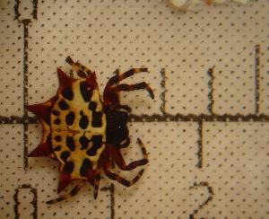 ( - MXBCS054)  @13 [ ] CreativeCommons - Attribution Non-Commercial Share-Alike (2011) Carlos Palacios Centro de Investigaciones Biologicas del Noroeste