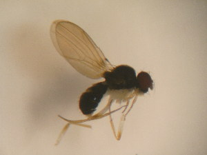 (Paraliodrosophila - MYCBR116N)  @12 [ ] No Rights Reserved  Unspecified Unspecified