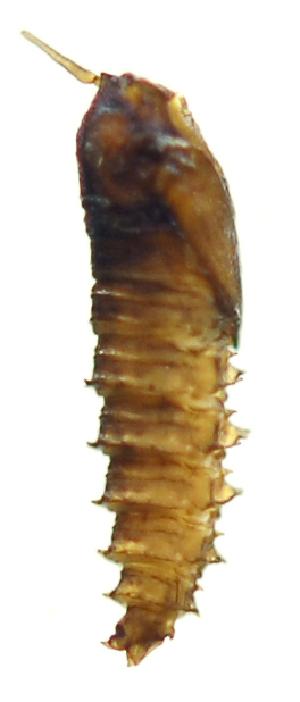 (PsychGn1 - INB0004344646)  @12 [ ] Copyright (2012) M. Zumbado Instituto Nacional de Biodiversidad