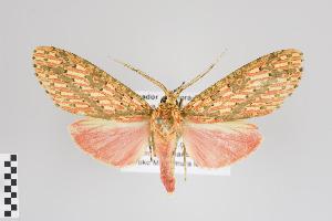 (Haemaphlebiella - Arcec 30167)  @14 [ ] Copyright (2013) Gunnar Brehm Institut fuer Spezielle Zoologie und Evolutionsbiologie, Friedrich-Schiller Universität Jena