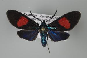( - Arcec 32108)  @14 [ ] Copyright (2010) Unspecified Institut fuer Spezielle Zoologie und Evolutionsbiologie, Friedrich-Schiller Universität Jena