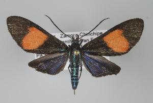 ( - Arcec 32109)  @14 [ ] Copyright (2010) Unspecified Institut fuer Spezielle Zoologie und Evolutionsbiologie, Friedrich-Schiller Universität Jena