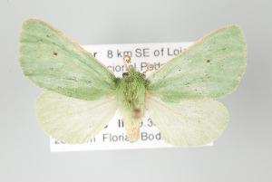 (Chlorhoda - Arcec 32146)  @14 [ ] Copyright (2010) Gunnar Brehm Institut fuer Spezielle Zoologie und Evolutionsbiologie, Friedrich-Schiller Universität Jena