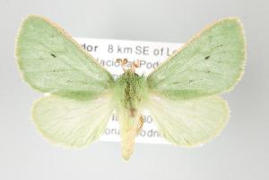 (Chlorhoda - Arcec 32168)  @14 [ ] Copyright (2010) Gunnar Brehm Institut fuer Spezielle Zoologie und Evolutionsbiologie, Friedrich-Schiller Universität Jena