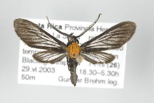 (Sauritinia - ArcCR 40139)  @14 [ ] Copyright (2010) Unspecified Institut fuer Spezielle Zoologie und Evolutionsbiologie, Friedrich-Schiller Universität Jena