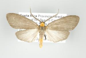 (Tricypha - ArcCR 42041)  @14 [ ] Copyright (2010) Gunnar Brehm Institut fuer Spezielle Zoologie und Evolutionsbiologie, Friedrich-Schiller Universität Jena