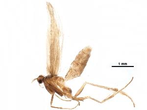 (Coleophora JFL333 - BIOUG07348-B07)  @15 [ ] CreativeCommons - Attribution Non-Commercial Share-Alike (2015) CBG Photography Group Centre for Biodiversity Genomics