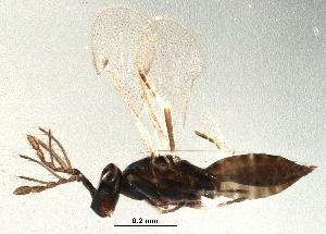 (Necremnus - BIOUG07356-G02)  @13 [ ] CreativeCommons - Attribution Non-Commercial Share-Alike (2014) BIO Photography Group Biodiversity Institute of Ontario