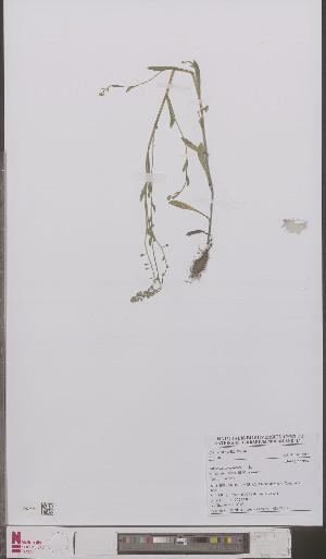 (Myosotis scorpioides nemorosa - L 0895725)  @11 [ ] CreativeCommons - Attribution Non-Commercial Share-Alike (2012) Naturalis Biodiversity center Naturalis Biodiversity center