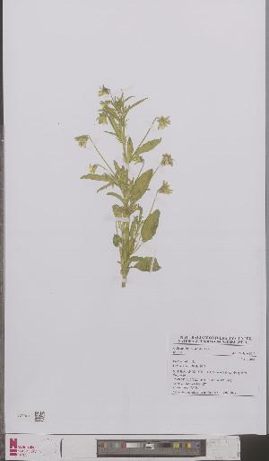 (Viola tricolor - L 0895902)  @11 [ ] CreativeCommons - Attribution Non-Commercial Share-Alike (2012) Naturalis Biodiversity center Naturalis Biodiversity center