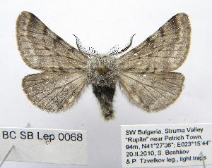 (Nyssia - BC_SB_Lep_0068)  @11 [ ] CreativeCommons - Attribution Non-Commercial Share-Alike (2010) Gergin Blagoev, Biodiversity Intitute of Ontario Biodiversity Institute of Ontario