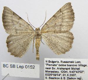 (Odonthognophos - BC_SB_Lep_0152)  @11 [ ] CreativeCommons - Attribution Non-Commercial Share-Alike (2010) Gergin Blagoev, Biodiversity Intitute of Ontario Biodiversity Institute of Ontario