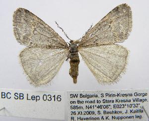 (Kresnaia - BC_SB_Lep_0316)  @15 [ ] CreativeCommons - Attribution Non-Commercial Share-Alike (2010) NMNH, Sofia, Bulgaria Biodiversity Institute of Ontario