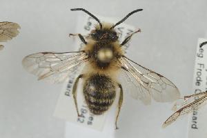 ( - NOAPI540)  @11 [ ] CC-NC-SA (2014) Arnstein Staverlokk Norwegian Institute of Nature Research